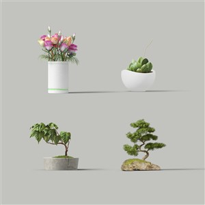 盆栽样机素材绿植鲜花样机素材