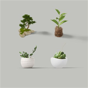 绿植盆栽样机素材