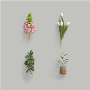 鲜花绿植样机素材树叶样机素材