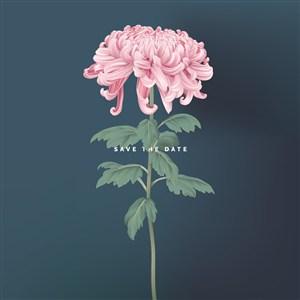 矢量粉色菊花海报背景素材