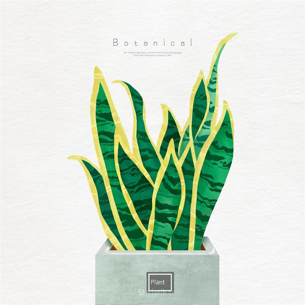 手绘盆栽植物
