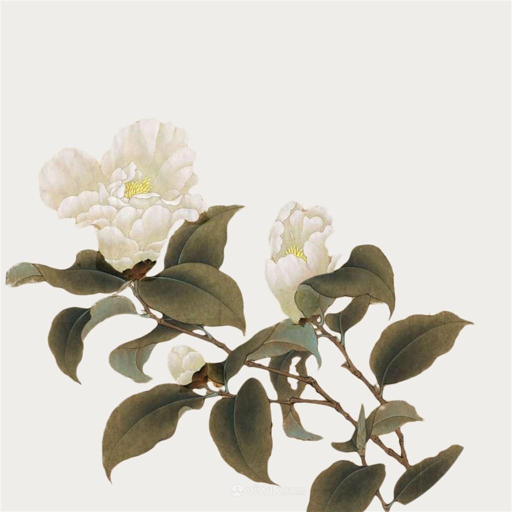 工笔画免抠图白色花卉素材