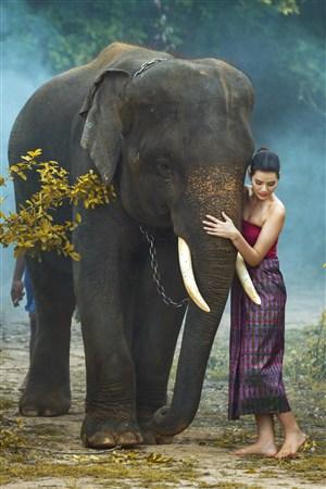 美女与泰国大象高清野生动物图片