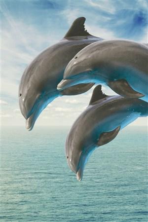 高清海豚海洋动物图片