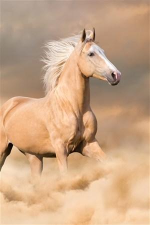 黃土高原上奔跑的駿馬野生動物圖片