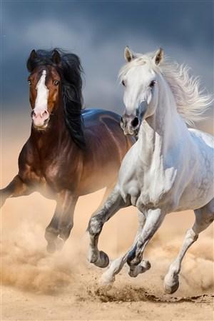 英姿勃勃的駿馬野生動物圖片
