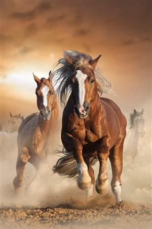 逐日追风的骏马野生动物图片
