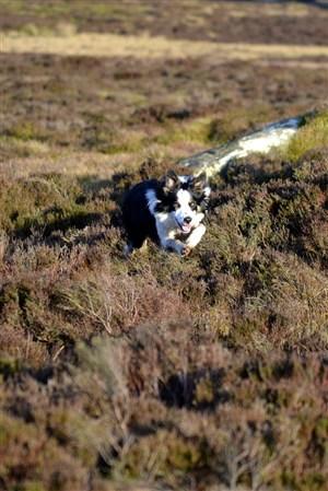 草原里花斑狼野生动物图片