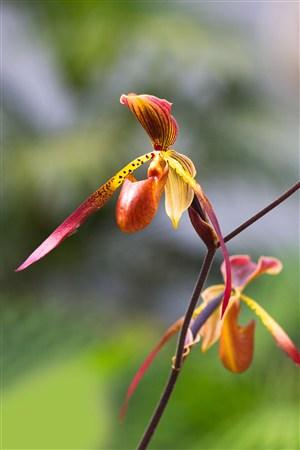 高清兰花鲜花图片