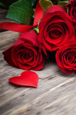 三只紅色玫瑰鮮花圖片