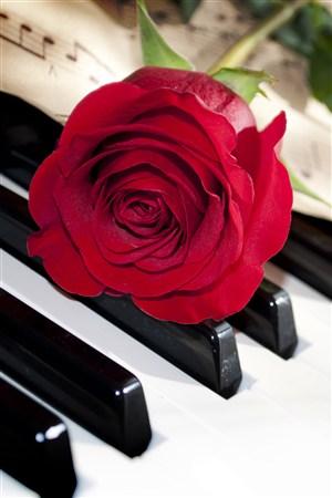 鋼琴上的紅色玫瑰鮮花圖片