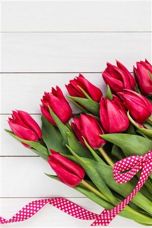 红装素裹郁金香鲜花图片