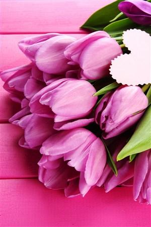 紫色花束郁金香鲜花图片