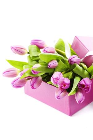 粉色魅力郁金香鲜花图片