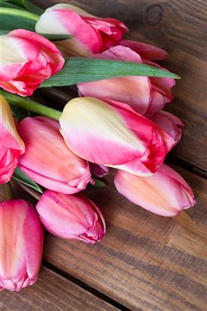 清新粉色花束郁金香鲜花图片