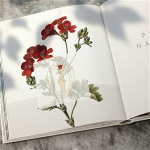 打开的花店画册杂志贴图样机