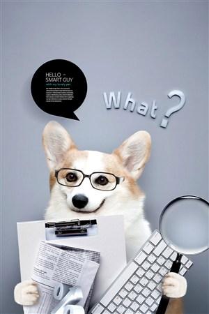 创意商务办公的柯基可爱宠物海报