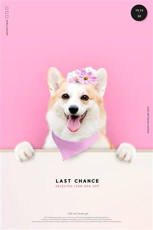 头戴小花的可爱柯基宠物海报模板