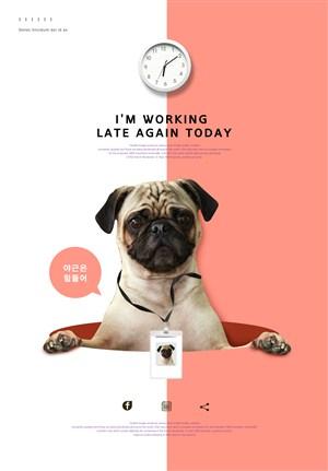 韩国宠物店网页网站模板