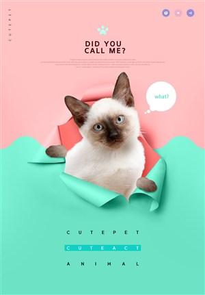 宠物店网红宠物网页网站模板