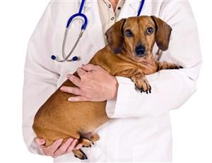 宠物医院医生抱着可爱胖狗狗图片