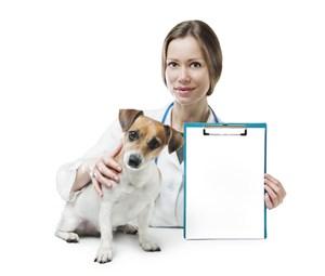 宠物医院医生空白文档和可爱狗狗图片