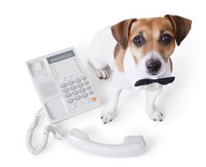 宠物医院守在电话机旁边的狗狗图片