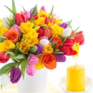 高清方形郁金香花束图片