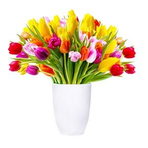 鲜艳花束郁金香花朵图片