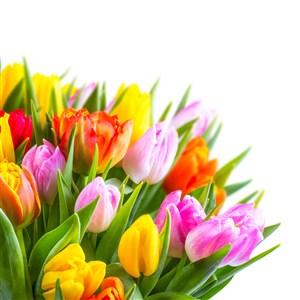 大朵鲜花假花花束郁金香花图片
