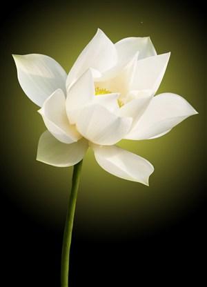 高清摄影荷花植物图片