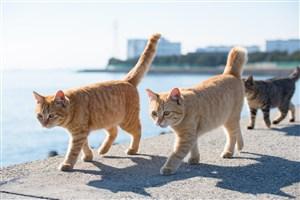 海边巡逻的猫咪图片