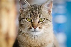 严肃的猫咪图片