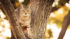 站在书上的猫咪图片