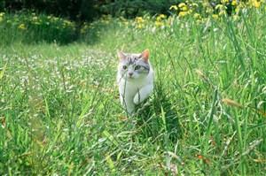 绿草地里白花猫猫咪图片