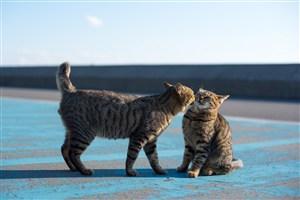 两只狸花猫咪图片