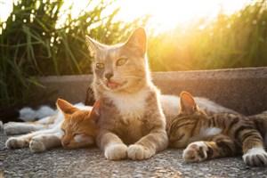 太阳下睡觉的猫咪图片
