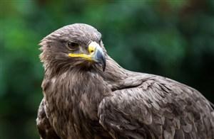 高清老鹰图片