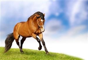高清素材野生动物骏马图片