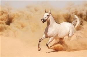 沙漠狂奔的骏马图片