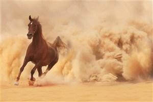汗血宝马奔跑骏马野生动物图片