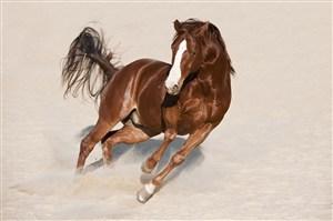 策马奔腾的骏马图片